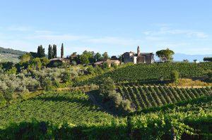 Il Santo vineyard Chianti